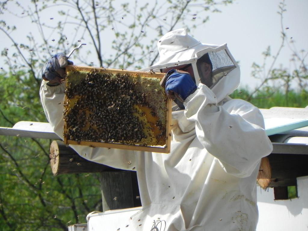 pane-e-bellezza-api-oscar