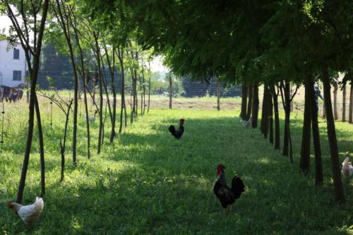 fattoria-didattica-pane-e-bellezza-14